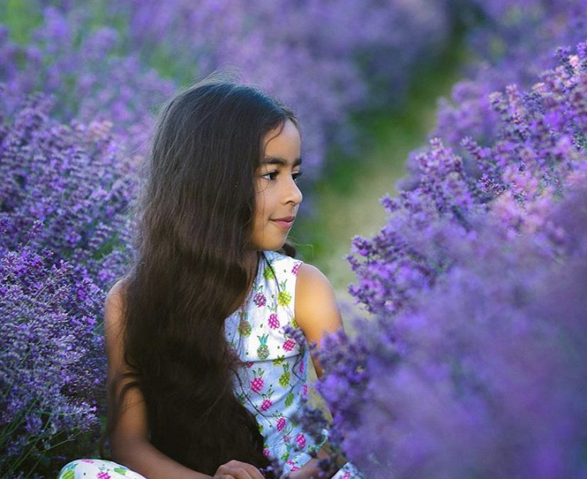 Lavender – Mini Sessions